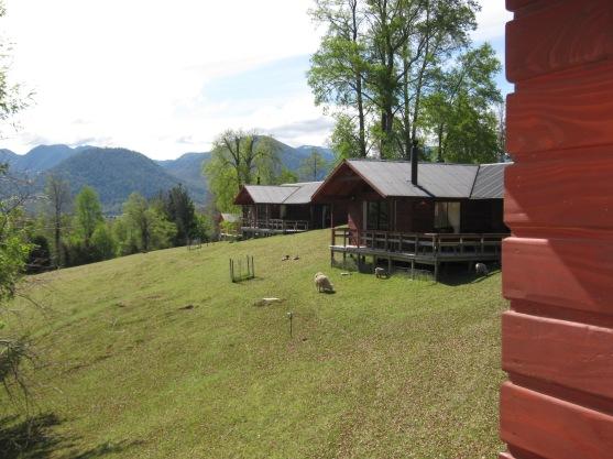 As fofíssimas ovelhas pastando próximo às cabanas nos distraíam no deck.