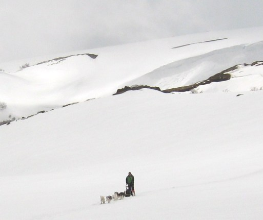 Passeio de trenó com cães em Villarica no Chile - Husk Tour