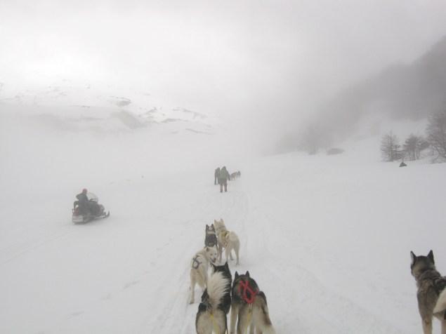 Nevoeiro durante o husk tour ou dog mushing em Villarica