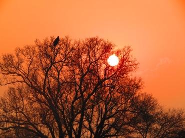 Pôr do Sol na Savana