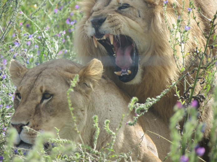 Drakenstein Lion Park 2