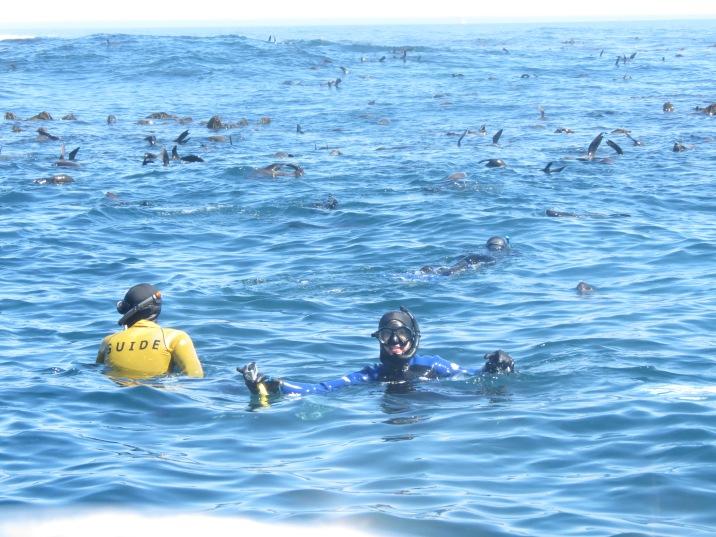 Mergulhar Focas Cidade do Cabo
