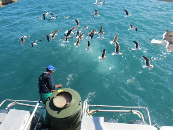 Mergulho Tubarão Branco Cape Town