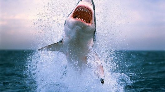 Shark-Jumps-on-the-Sea-Surface-Wallpaper-1024x576