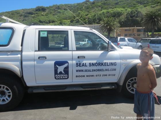 mergulho com focas cape town seal snorkeling