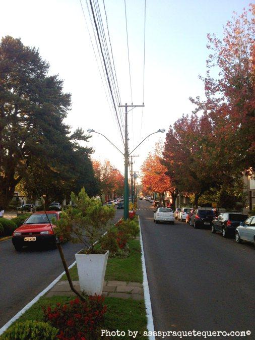Canela outono