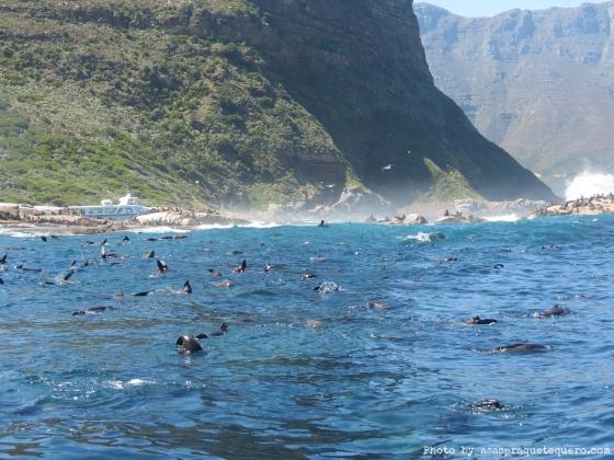 Mar com lobos marinhos na água