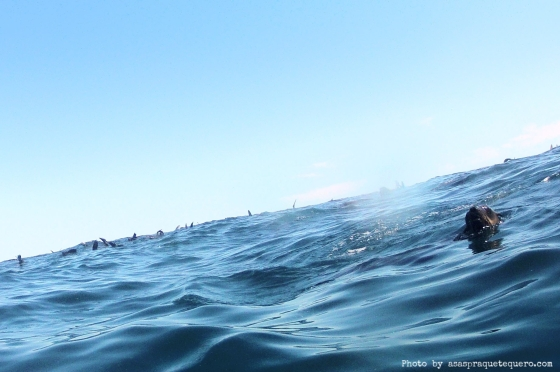 Lobo marinho com a cabeça fora da água....