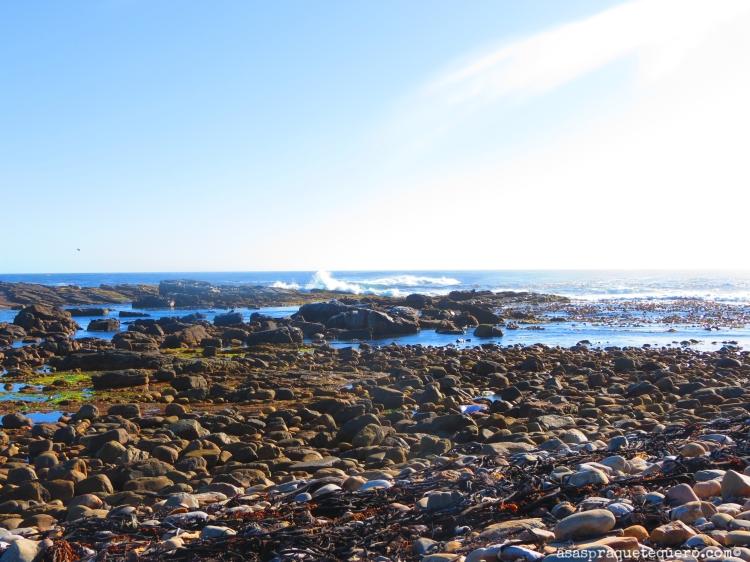 Cabo da Boa Esperança Cape Town (2)