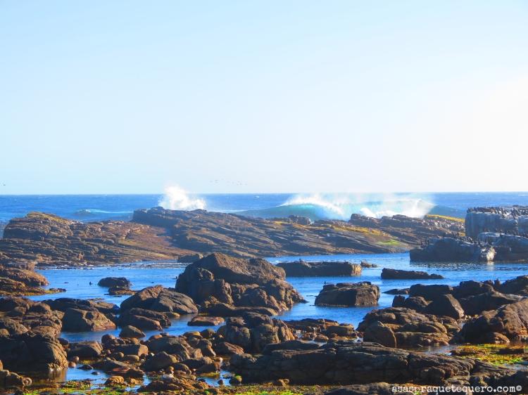 Cabo da Boa Esperança Cape Town3