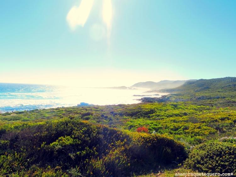 Cabo da Boa Esperança Cape Towned