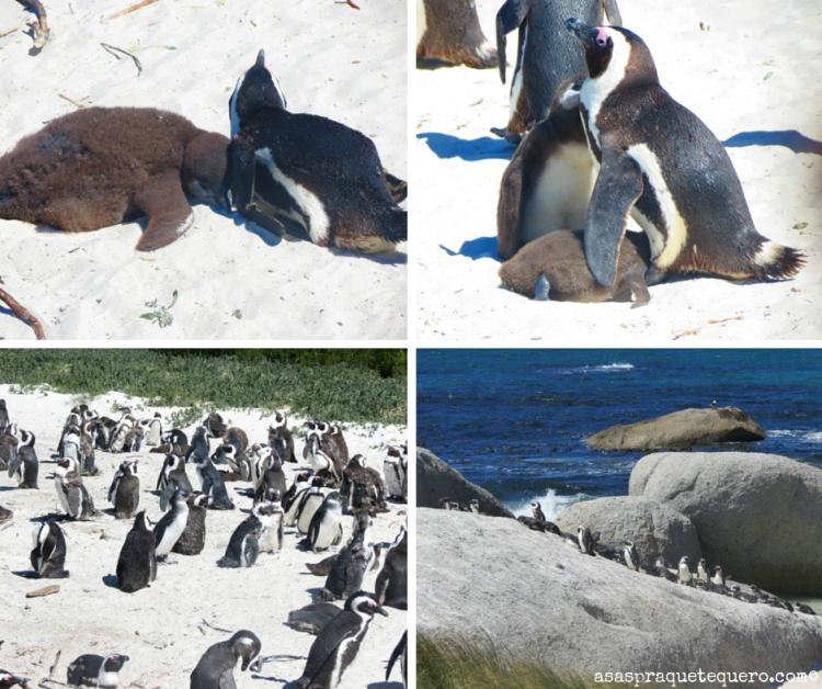 Praia dos Pingunis 2_1