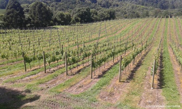 degustação de vinhos na serra gaucha chandon (2)