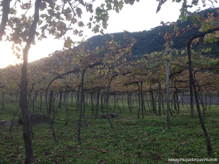 degustação de vinhos na serra gaucha jolimont (2)