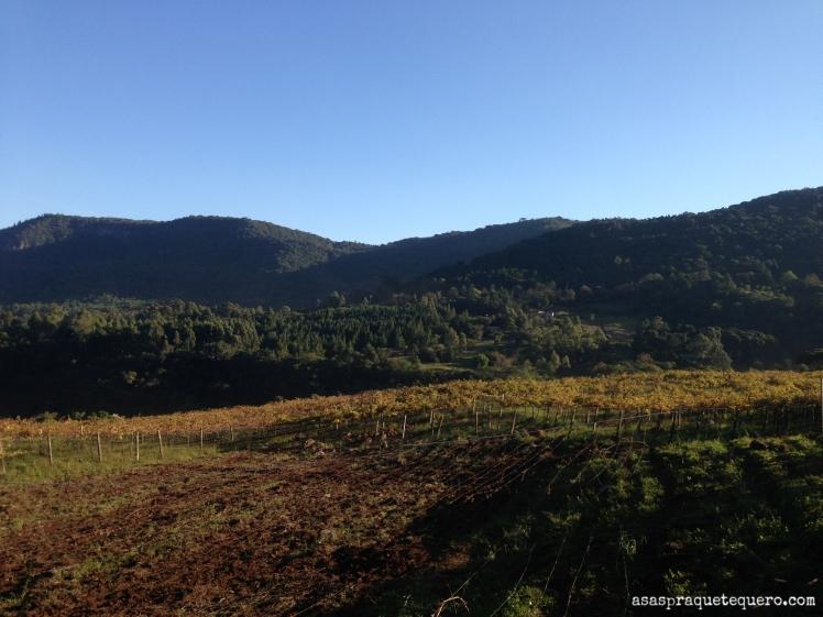 degustação de vinhos na serra gaucha jolimont 3