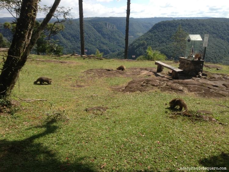 O que fazer em Canela Parque da Ferradura (2)