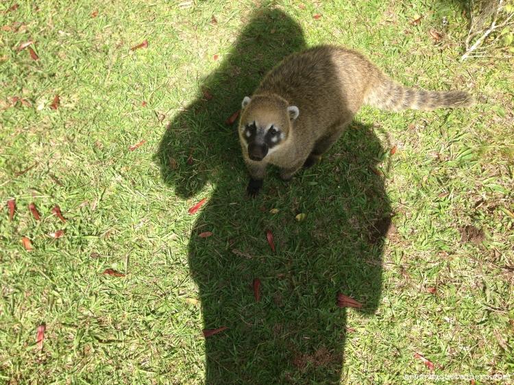 O que fazer em Canela Parque da Ferradura (3)