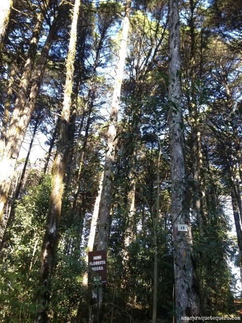 O que fazer em Canela Parque das Sequoias