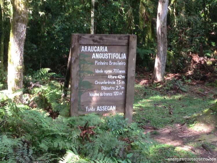 O que fazer em Canela Pinheiro Grosso (5)