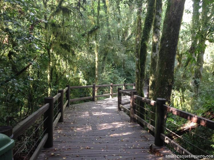 O que fazer em Canela Pinheiro Grosso (6)