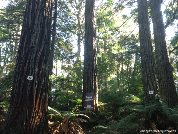 O que fazer em Canela sequoias (2)