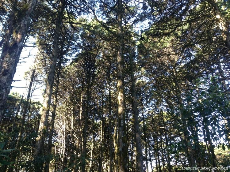 O que fazer em Canela Sequoias