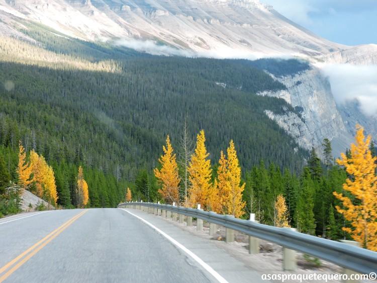 roadtrip-dirigir-icefields-parkway-15
