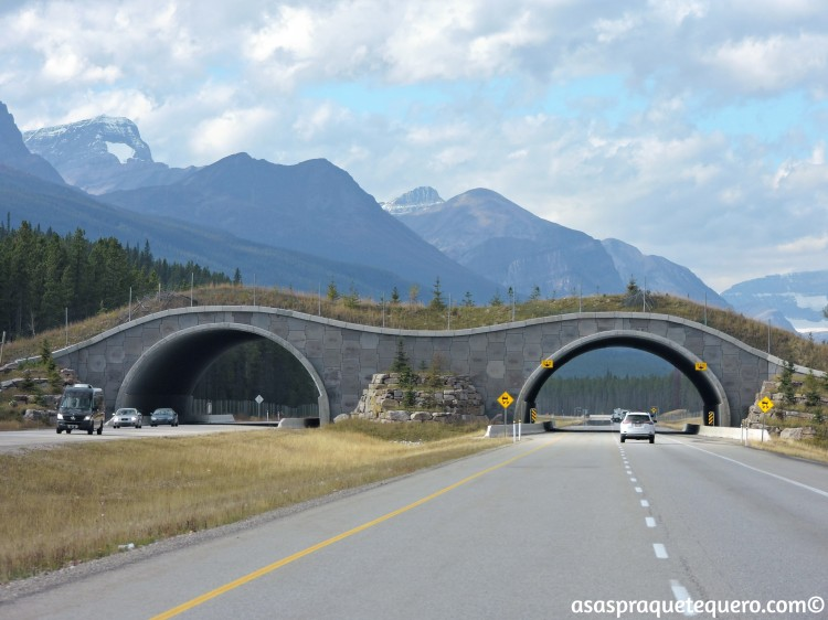 roadtrip-dirigir-icefields-parkway-2