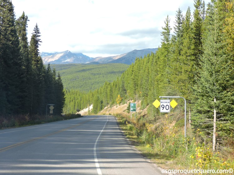 roadtrip-dirigir-icefields-parkway-4