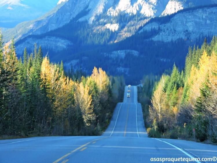 roadtrip-dirigir-icefields-parkway-5