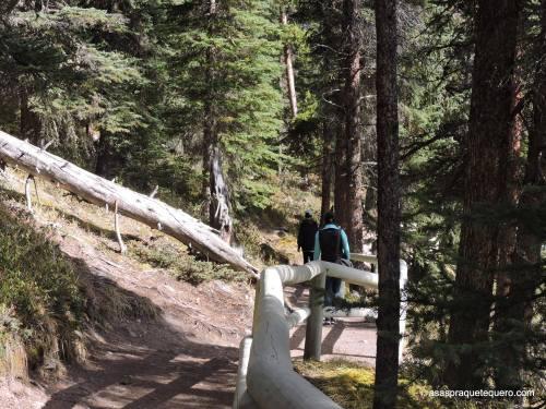 A observação é feita na margem do lago ou nos mirantes, acessíveis por trilhas