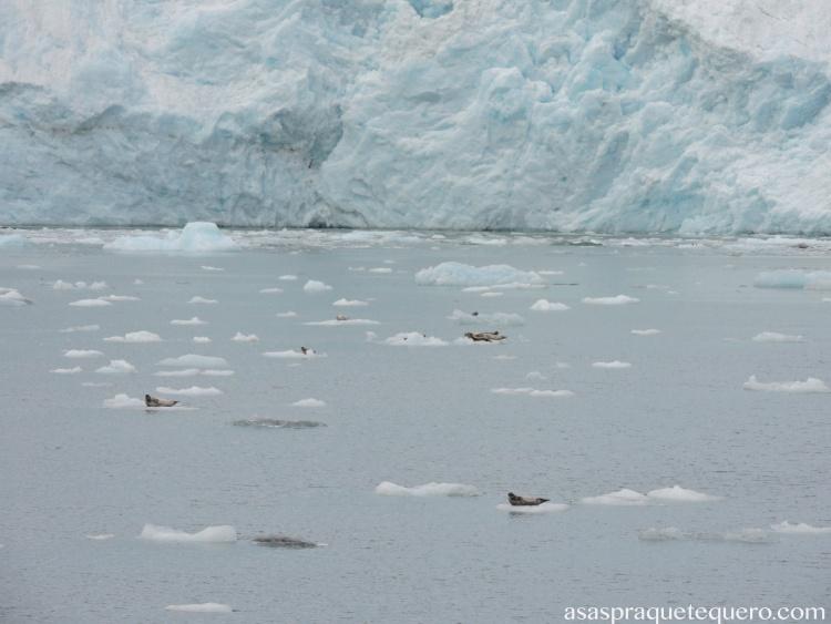 Focas descansando no gelo