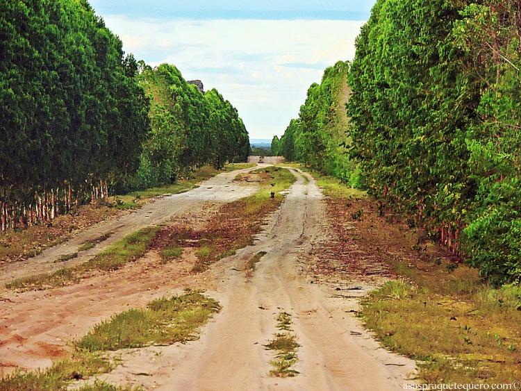 Estrada Jalapao
